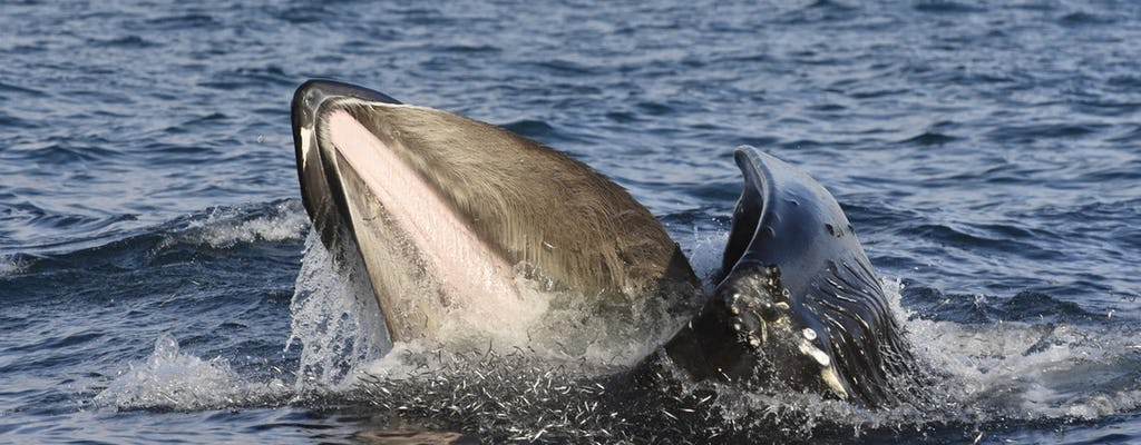 Tour del Golden Circle e osservazione delle balene