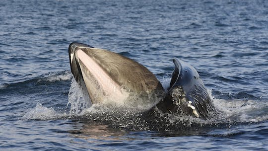 Golden Circle tour and whale watching