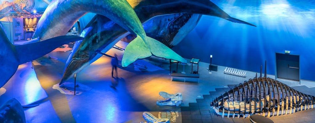 Entrada das Baleias da Islândia com guia de áudio e passeio