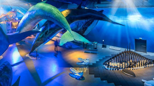 Whales of Iceland admission with audio guide and tour
