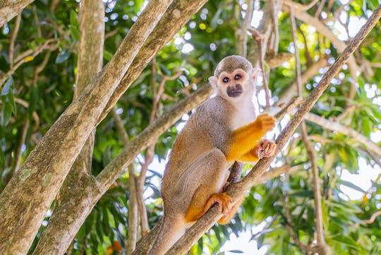Monkey Jungle Tour