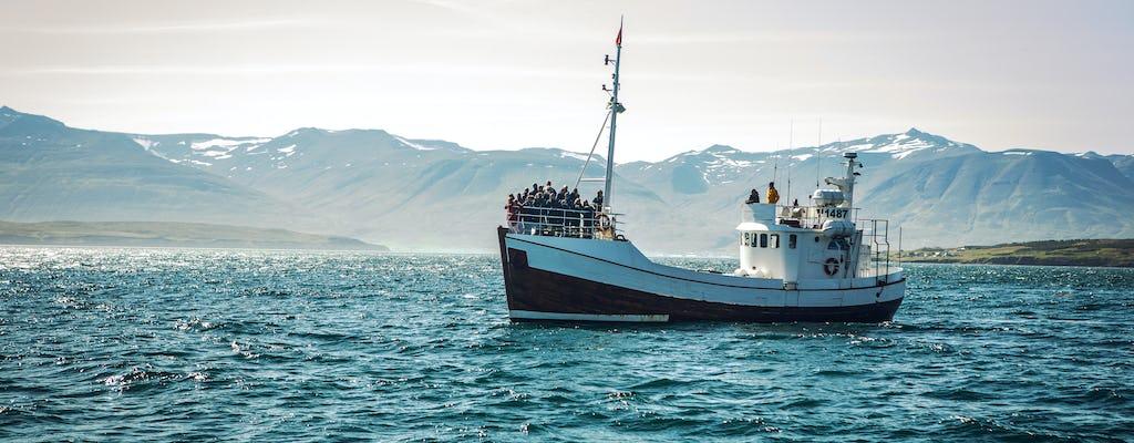 Tour de observação de baleias em Reykjavik