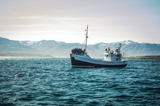 Tour de avistamiento de ballenas en Reykjavik