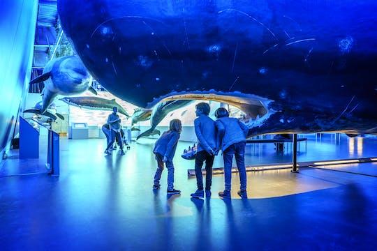 Admissão de baleias na Islândia e passeio de barco com observação de baleias