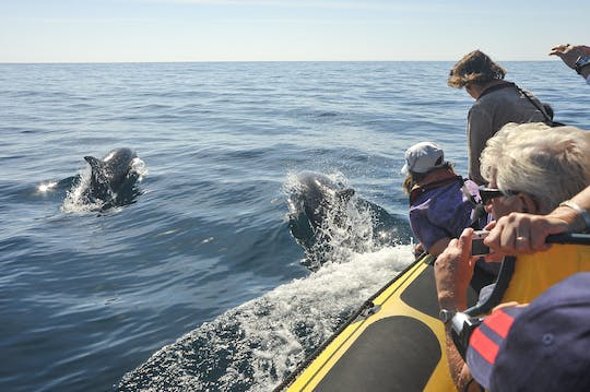 Insonia Cave and Dolphins Speedboat with Transport from Albufeira