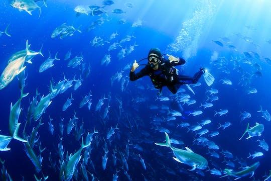 Los Cabos Certified Diver Tour