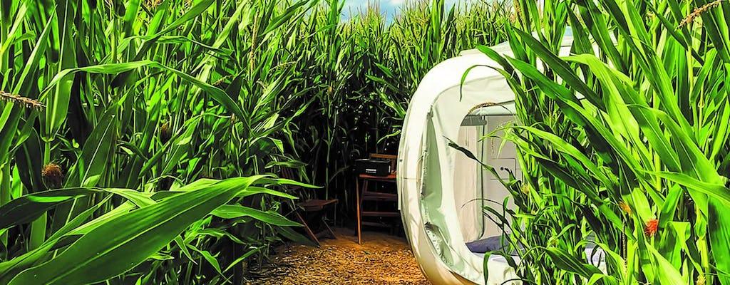 Übernachtung im Sleeperoo-Würfel in einem Maislabyrinth bei Kassel