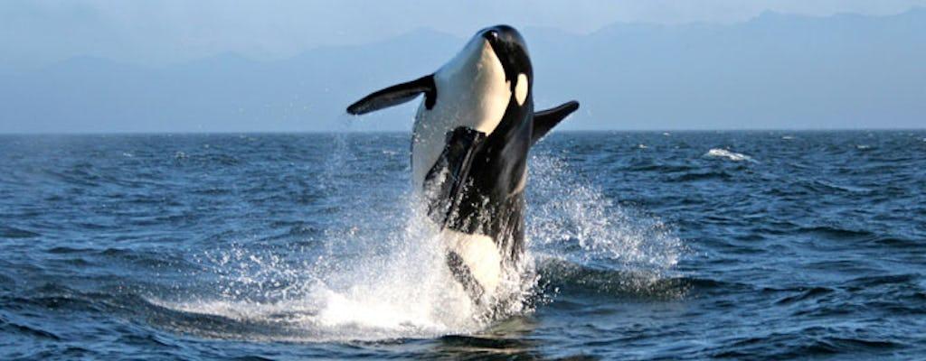 Marine wildlife tour by zodiac vessel from Victoria