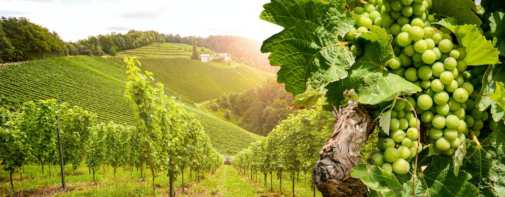 Day tour in Burgundy with 10 wines tasting at local wineries
