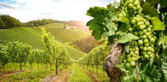 Excursão de um dia na Borgonha com 10 provas de vinhos em vinícolas locais