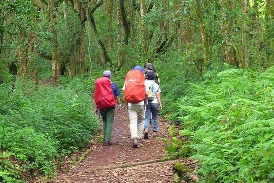 Dagwandeling op de Kilimanjaro