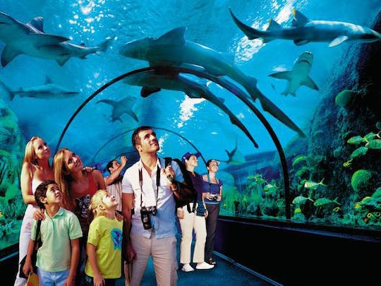 Loro Parque – Bus Transfer from the South
