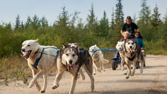 Husky ride adventure