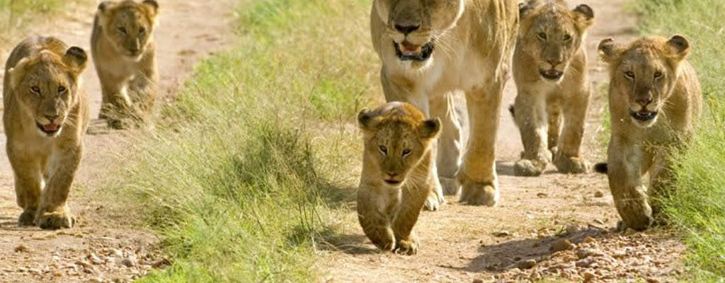 Parque Nacional Mikumi Safari de 2 dias