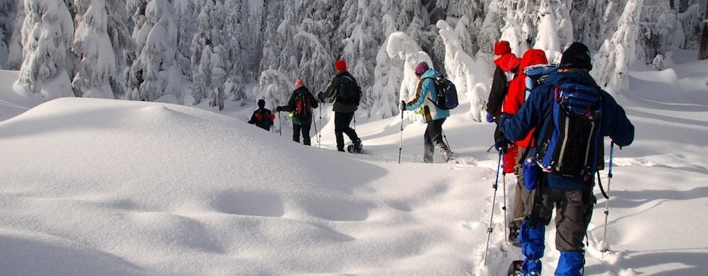 Snowshoeing adventure in Lapland