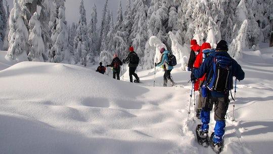 Snowshoeing adventure in Lapland