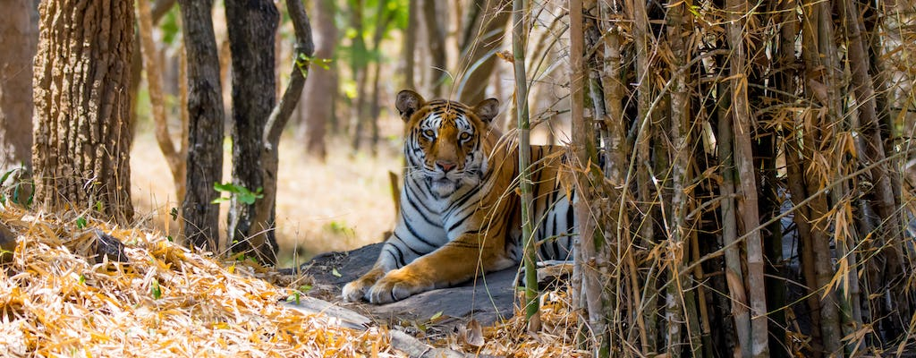 Full-day excursion to Bannerghatta National Park