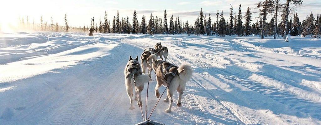 10km Husky sleigh ride adventure