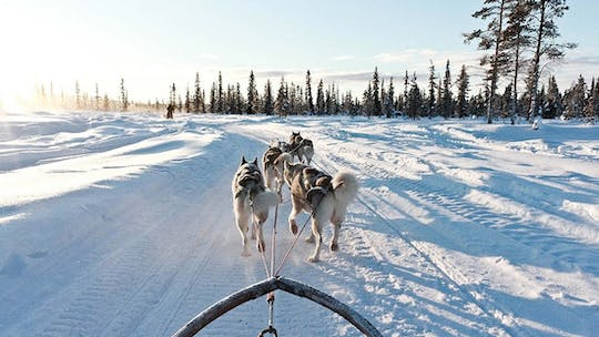 10km Husky sleigh ride adventure