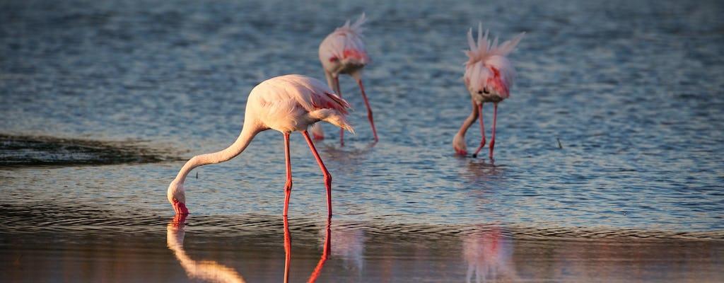 Flamingos oasis bike tour