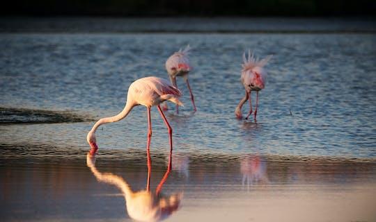 Passeio de bicicleta oásis de flamingos