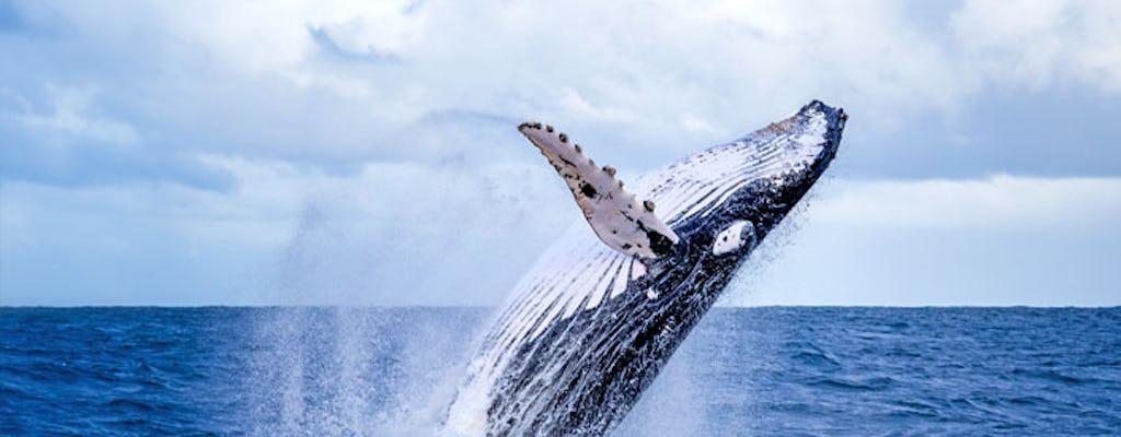 Osservazione delle balene zodiacali e tour della fauna selvatica
