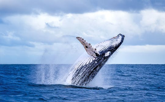 Zodiac whale watching and wildlife tour