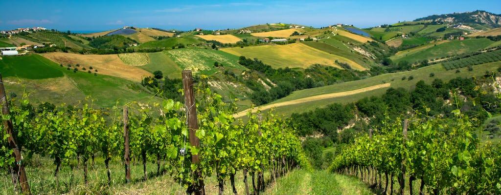 Tour del vino e degustazione nella cantina Rapino