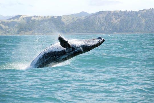Obserwacja wielorybów