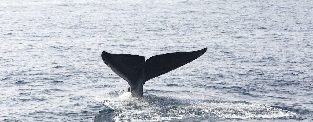 Obserwowanie wielorybów w zatoce Samana