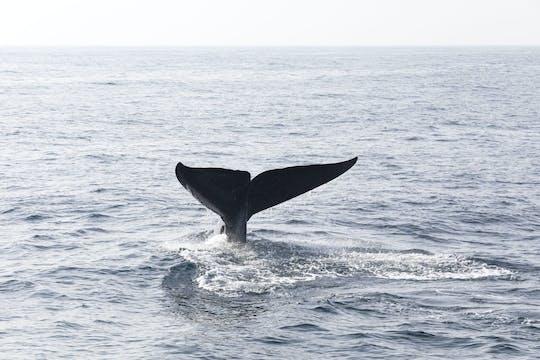 Excursion d'observation des baleines à Samana Bay