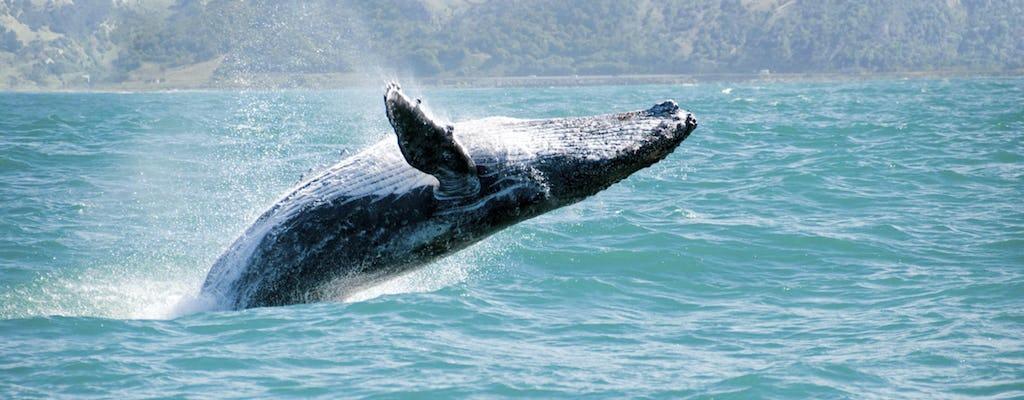 Sortie en mer d'observation des baleines