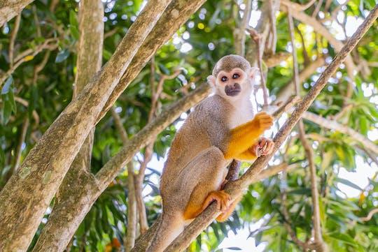 Małpia dżungla