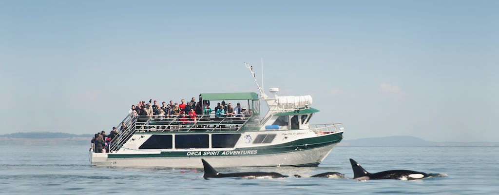 Whale watching and wildlife tour on covered vessel