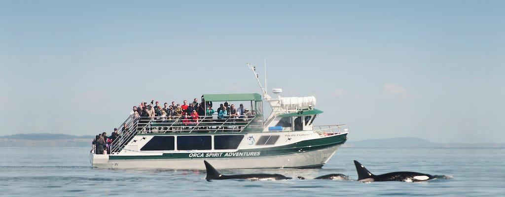 Osservazione delle balene e tour della fauna selvatica sulla nave coperta