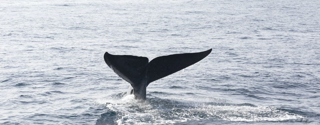 Samana Bay Whale Watching Tour