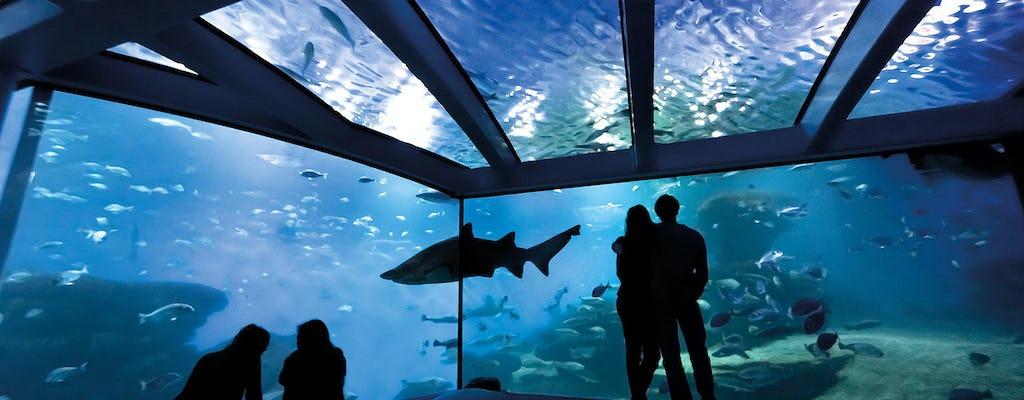 Palma Aquarium – z transportem