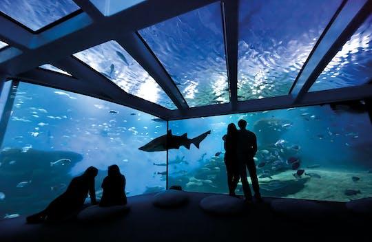 Palma Aquarium with Transfer