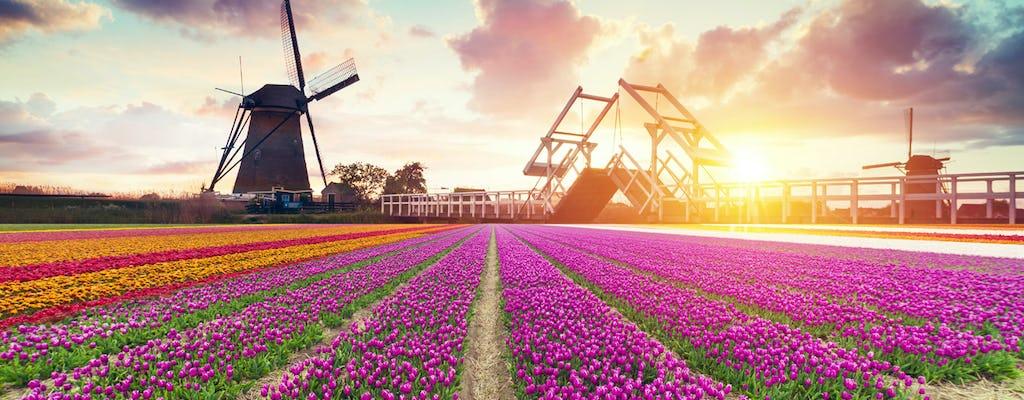 Tulip Fields, Windmills ed esperienze locali tour di un'intera giornata da Amsterdam