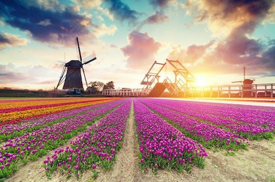 Campos de tulipas, moinhos de vento e experiências locais de dia inteiro saindo de Amsterdã
