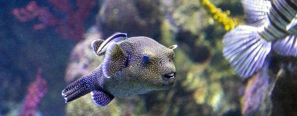 Aquarium Sea Life à Benalmádena