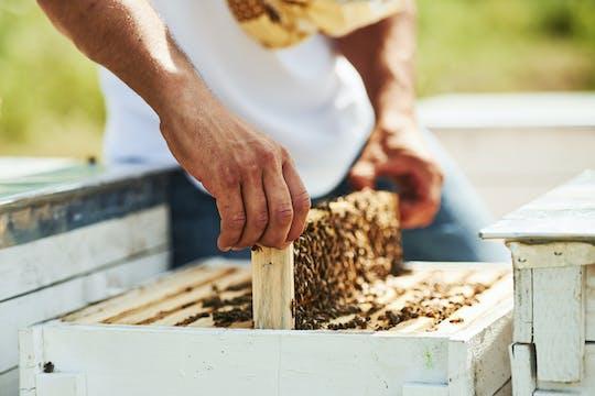 Tour de apicultura con degustación de miel orgánica