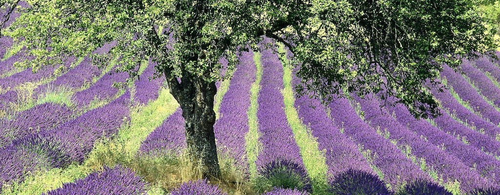 Lavender fields and Gorges du Verdon tour from Nice