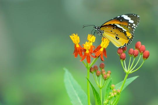 Mariposario - park motyli