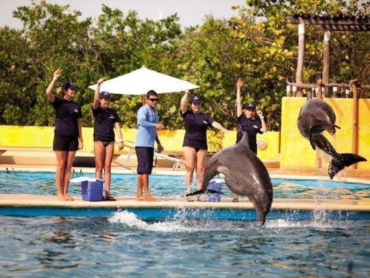 Puerto Vallarta Dolphin Trainer Ticket
