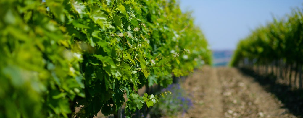Weingutbesuch beim Winzer und Verkostung
