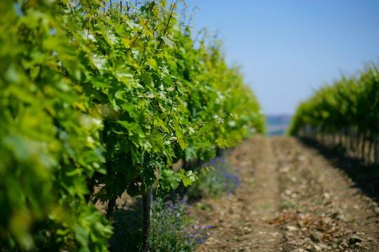 Visita à vinícola com o enólogo e degustação