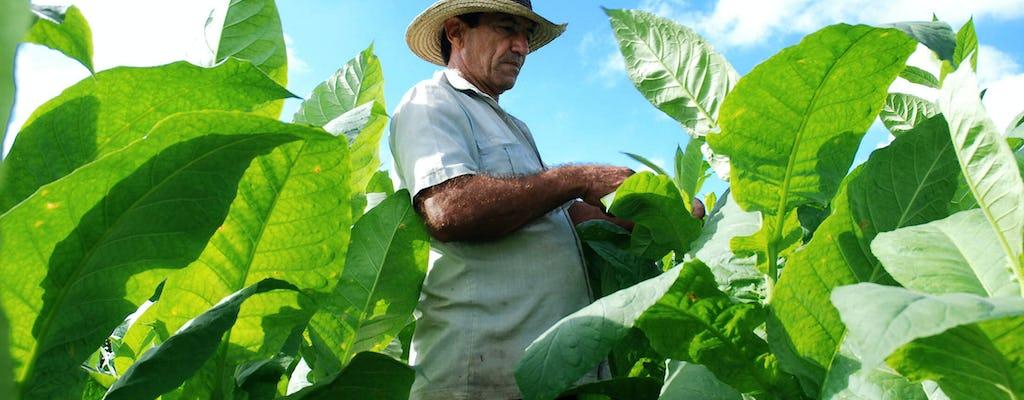 Les saveurs de Cuba