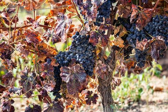 Tour de vinos de Cerdeña