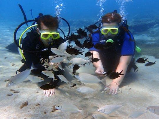 Plongée sous marine à Chypre